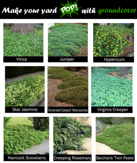 Good groundcover plants