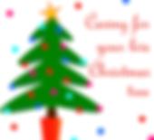 Living Christmas trees Sonora CA