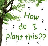 Buy native plants Sonora CA