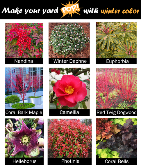 Plants that look good in winter