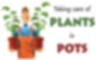 Plant expert Sonora CA