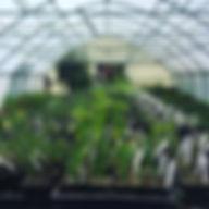 veggies 2019.jpg