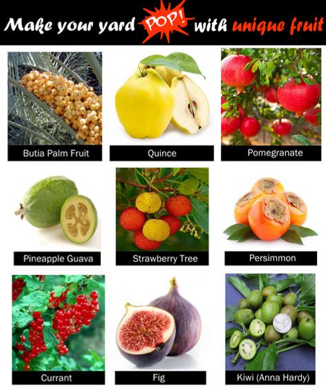Unique Fruit Trees
