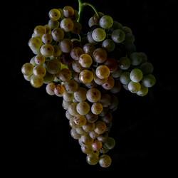 Michel Carossio - grappe raisin.jpg