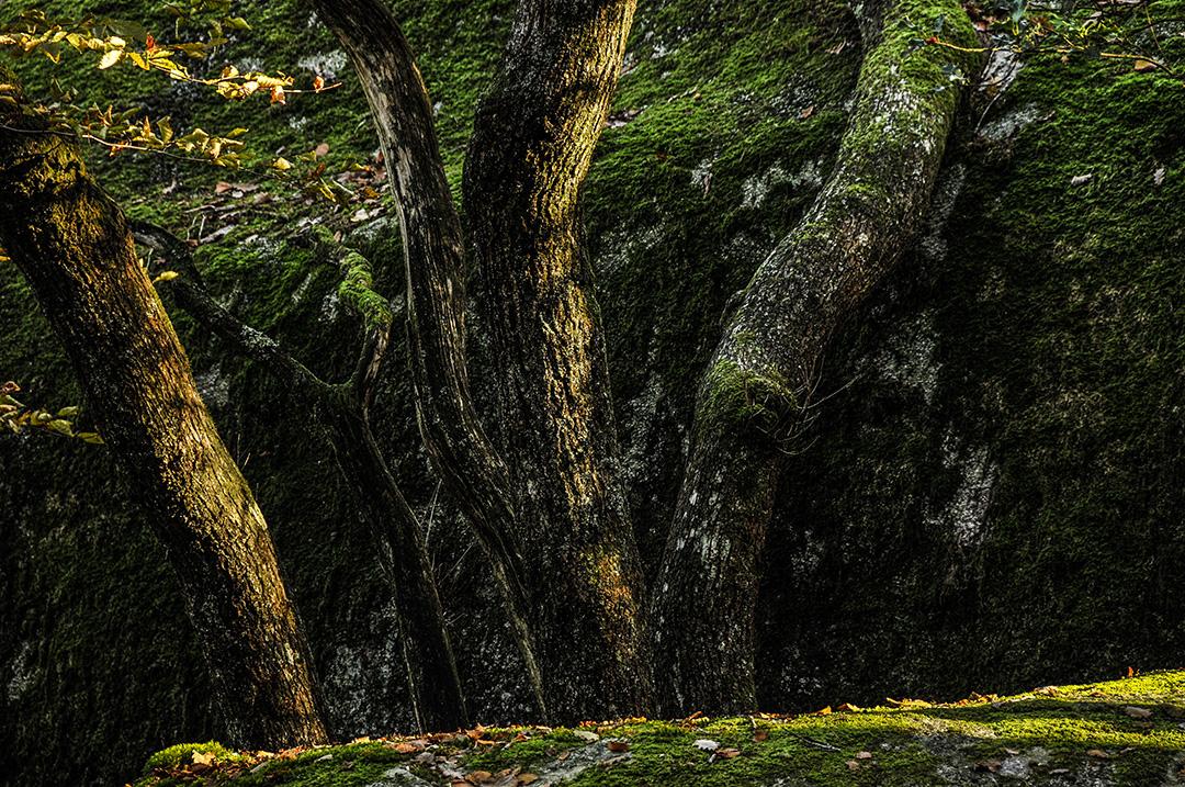 Sidobre_Forêt_5.jpg