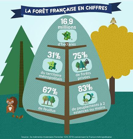 forêts françaises.jpg