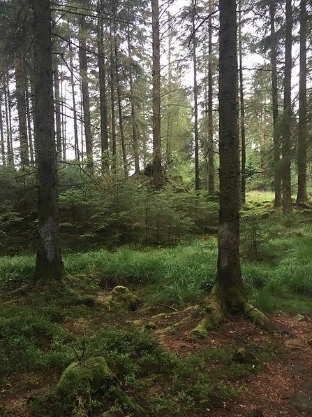 treepeople2.jpg