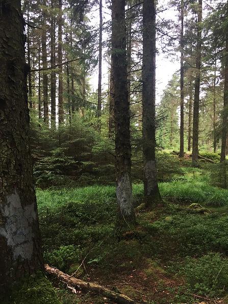 treefaces1.jpg
