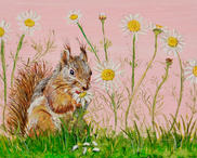 Red Squirrel Snacking on Chamomile (it is self medication - calms the crazy squirrel energy!)
