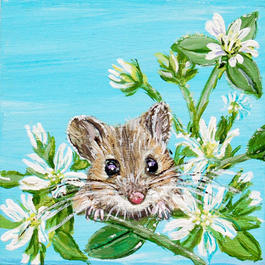 Peaking Mouse on Mouse Ear Chickweed on Blue