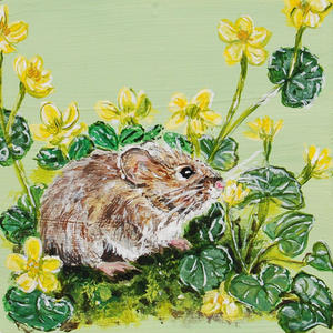 VOle (aka Meadow Mouse) amonst the Marsh Marigold on Green