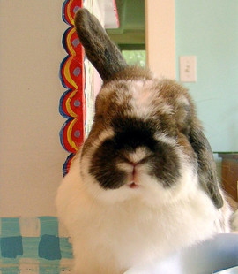 Henry the Bunny My Muse