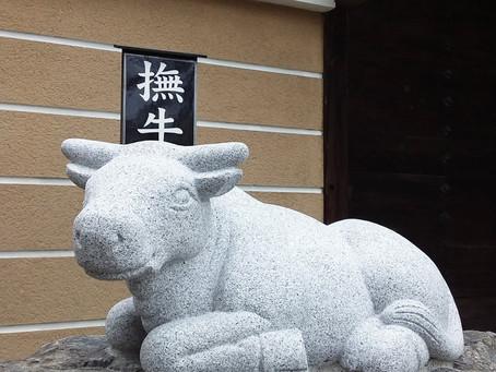 【キュートな撫牛!】
