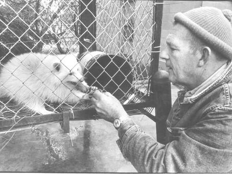 Folsom's Animal King