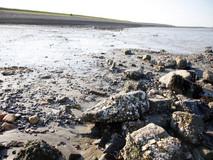 Strandje Walsoorden niet voor de zomer opgeknapt