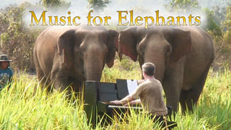 Music For Elephants