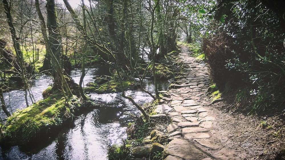 Rivelin Valley Walk