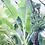 Thumbnail: 芭蕉 Plantains