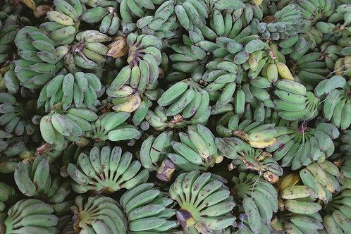 芭蕉 Plantains