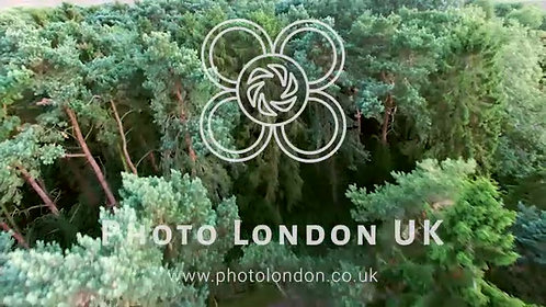 4K Aerial Flight Over Forest And Trees