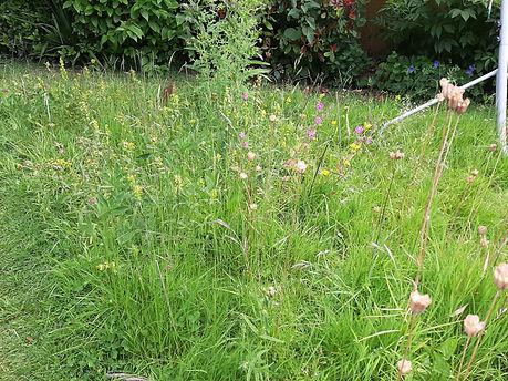 Wildflower%20meadow_edited.jpg