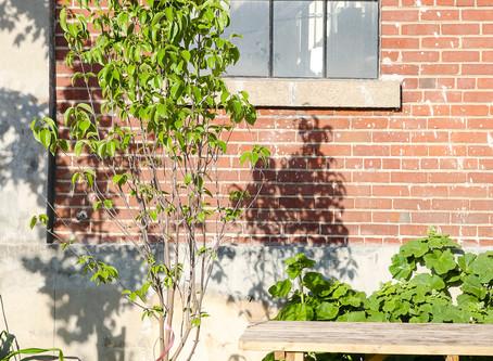 Un arbre pour mon quartier de retour du 23 août au 27 septembre!