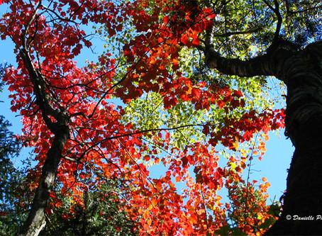 Un arbre pour mon quartier : l'automne, la meilleure saison pour planter