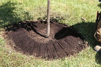Un arbre pour mon quartier