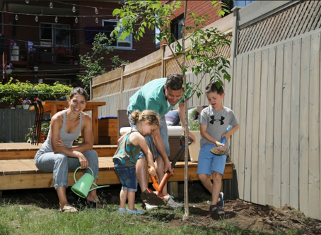 Un arbre pour mon quartier pour un Montréal plus vert