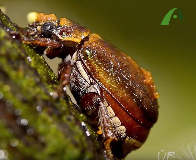 #4: Besouro na chuva e uma expedição ao pantanal - Últimos Refúgios na TV Ambiental