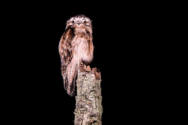#47: Aves noturnas - Últimos Refúgios na TV Ambiental