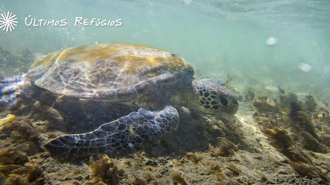 #34: Ilha de Coroa Vermelha - Últimos Refúgios na TV Ambiental
