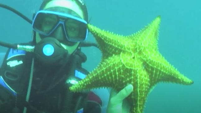 Minhas Maravilhas do Mundo: mergulho em Ilha Grande - Últimos Refúgios na TV Ambiental
