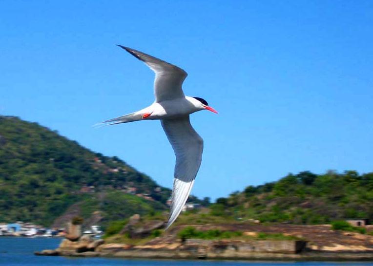 World Migratory Bird Day (1)