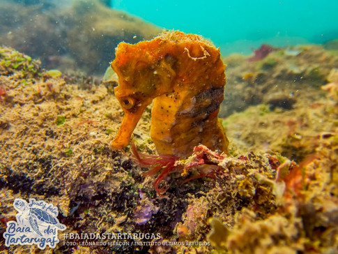 #54: Mergulho na Ilha do Boi - Últimos Refúgios na TV Ambiental