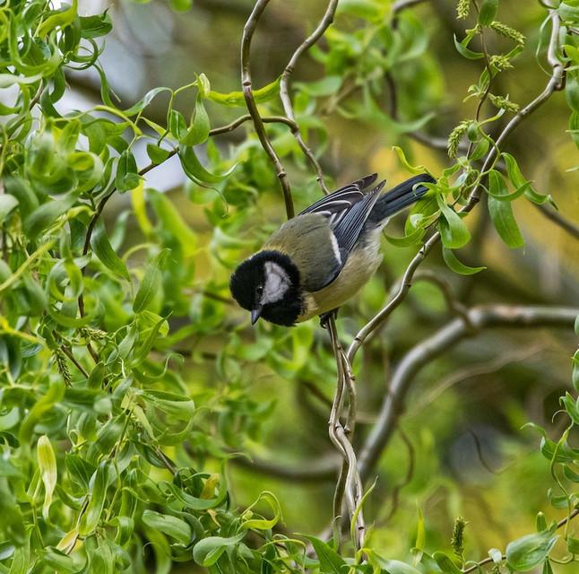 #35: Parque Natural na Alemanha - Últimos Refúgios na TV Ambiental