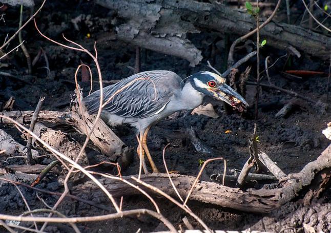 Motivos para preservar os manguezais