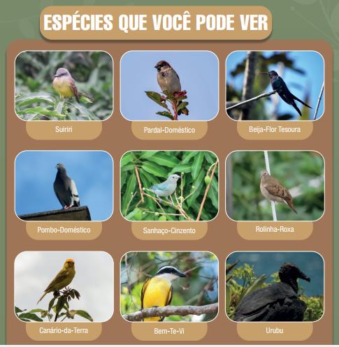 Cartilha de Observação de Aves: dicas para observar  a natureza sem sair de casa