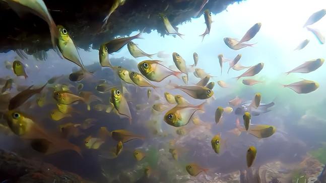 #56: Cardume de Raias e Praia dos Anjos - Últimos Refúgios na TV Ambiental