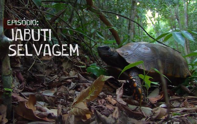 #8: O Jabuti Selvagem - Últimos Refúgios na TV Ambiental