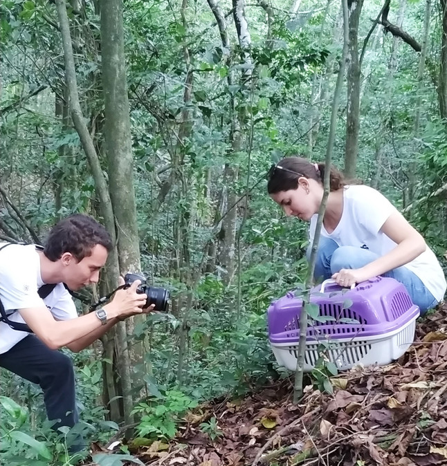 Projeto Marsupiais resgata gambá em Vitória e o devolve para a natureza