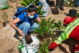 Projeto Vitória da Restinga participa de plantio de mudas nativas na praia de Camburi