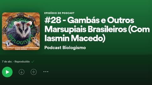 """Gambás e outros marsupiais brasileiros: Projeto Marsupiais no podcast """"Biologismo"""""""