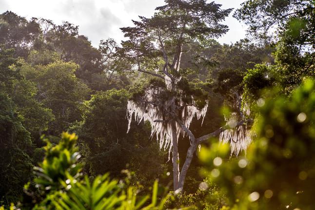 Para que servem as árvores? Entenda sua importância para o meio ambiente
