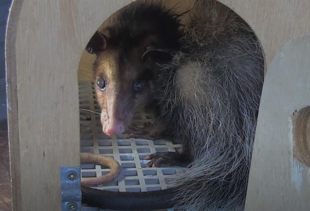 #13: Ação Ambiental do Projeto Marsupiais - Últimos Refúgios na TV Ambiental