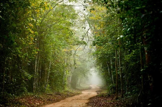 """Saiu na mídia: """"Sooretama: onde Amazônia e Mata Atlântica se encontram"""""""