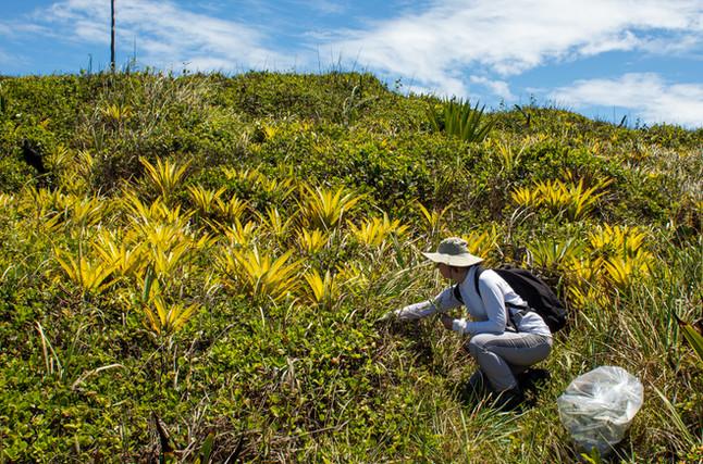 Expedição ao arquipélago de Três Ilhas, em Guarapari/ES, documenta espécies da flora capixaba