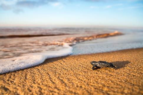 #39: Resgate de ovos de tartaruga - Últimos Refúgios na TV Ambiental