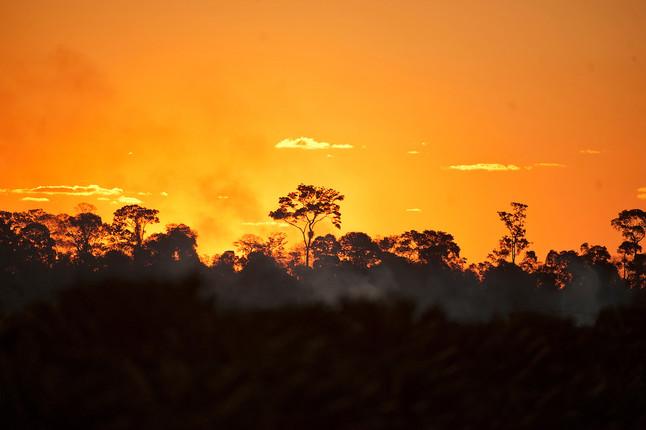 #51: Lembranças da Reserva Biológica de Sooretama - Últimos Refúgios na TV Ambiental
