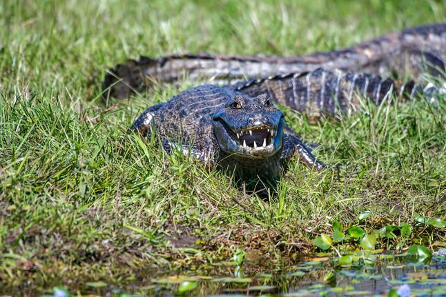 #49: Expedição ao Pantanal - Últimos Refúgios na TV Ambiental